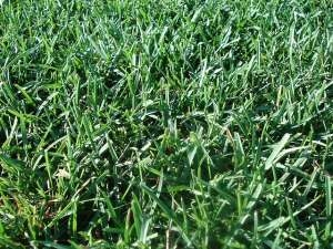 Wann Rasen Vertikutieren Wann Ist Die Richtige Zeit